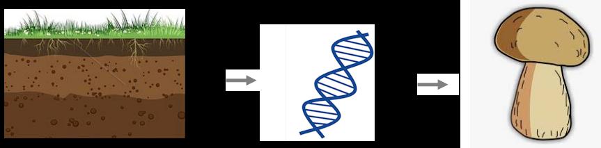 Bestimmung von Pilzarten über eine DNA-Sequenzierung von Pilzmyzel, OTU Clustering und einen BLAST Datenbankabgleich