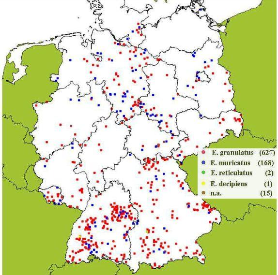 Vorkommen und Fundorte von Elaphomyces granulatus