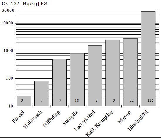Hirschtrüffel reichern mehr Radioaktivität (Cs-137) als andere Pilzarten an