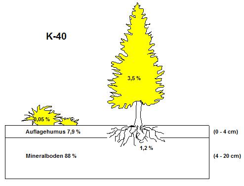Inventar der Kalium 40 Aktivität in einem Fichten-Waldökosystem