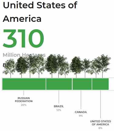 Anteil der Waldfläche der USA weltweit: Platz 4