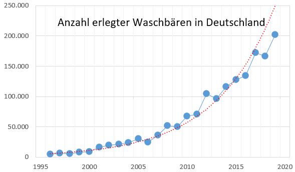 Entwicklung der Erlegungen von Waschbären in Deutschland Jagd