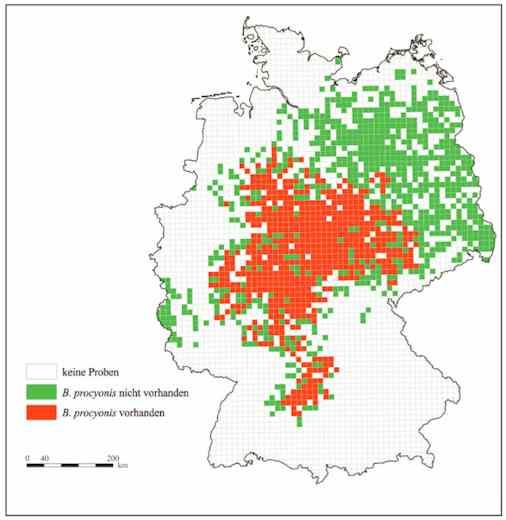 Verbreitung des Waschbärspulwurms in Deutschland