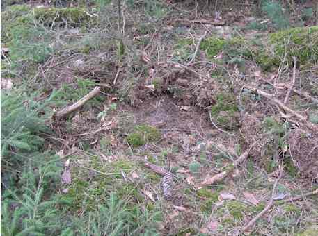 Wie regenerieren sich durchwühlte Bodenkompatimente?