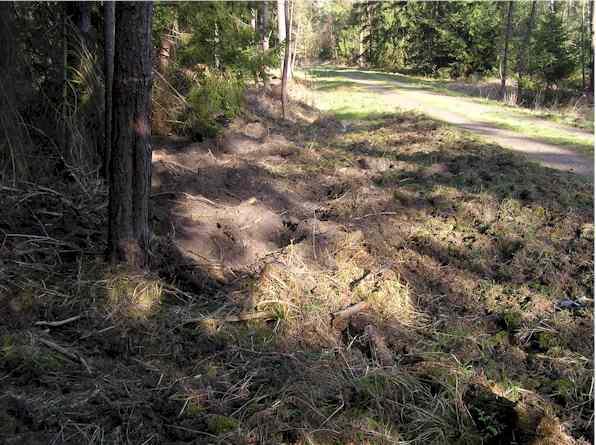 Wildschweine haben Boden neben einem Forstweg intensiv durchwühlt